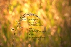 Brin d'herbe. ˆ Bonneville, Haute-Savoie. Poème àˆ l'acte.