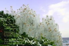 Fleurs gelŽées par les embruns de la bise, Evian. Poème àˆ l'hiver.