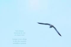 Mouette dans le ciel d'hiver. ˆ Evian. Poème au rève.