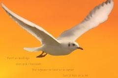 Montage d'une mouette du Lac LéŽman. Poème àˆ la vie.